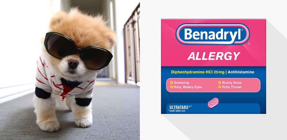 How Much Benadryl Can I Give A Dog