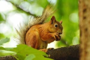 best pets for kids : squirrel